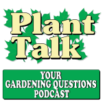 How Deep Does the Soil Have to Be in a Raised Bed Garden to Grow Tomatoes and Peppers?