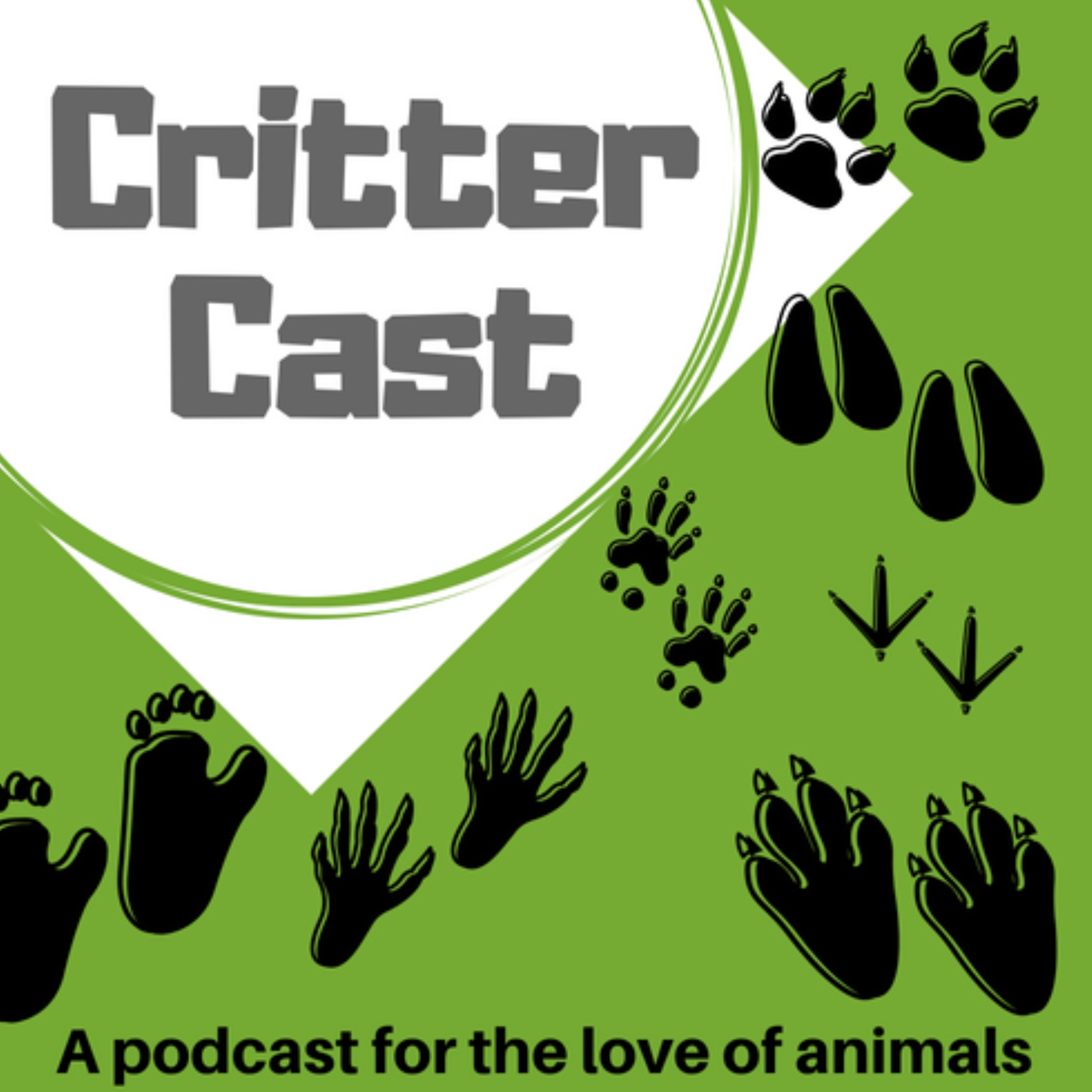 Episode 53: Meanwhile in the animal world